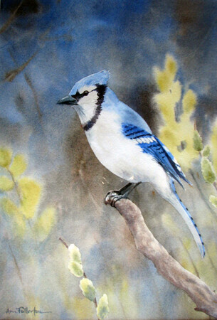 Blue Jay in the Willows