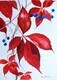 Virginia Creeper and Berries 2